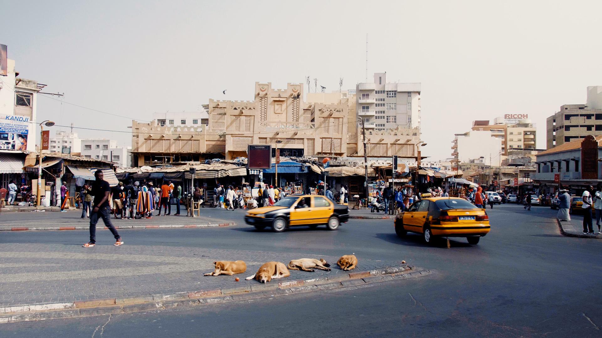 world-taxi-dakar-dogs